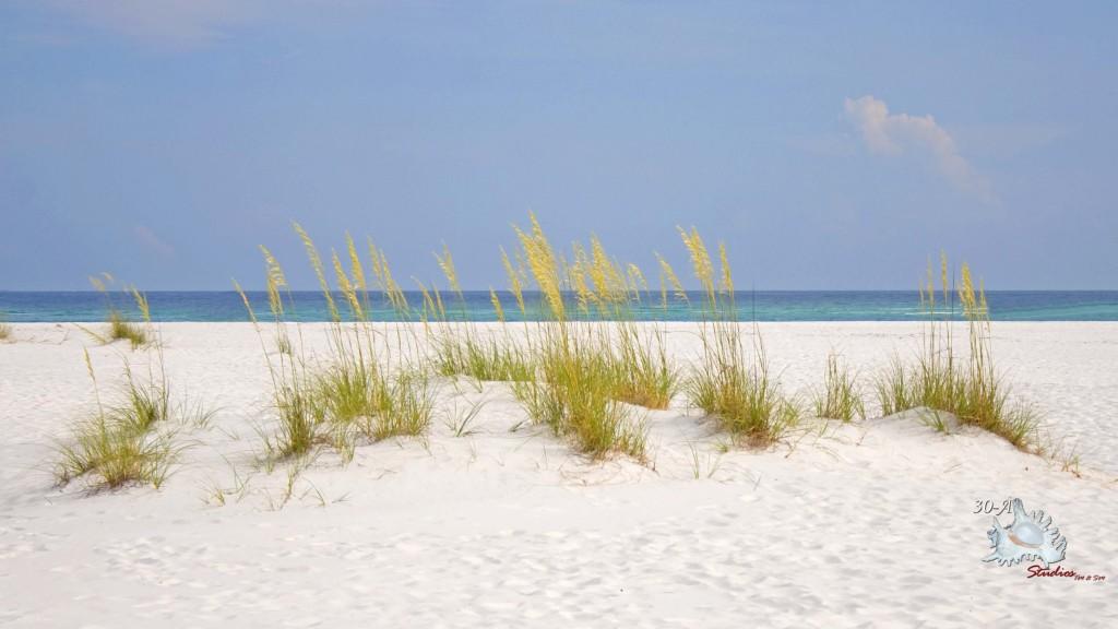 Gulf-Island-background-IMG_8728-1